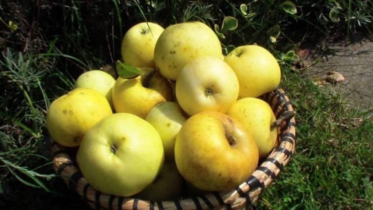 Zaljubljenik ste u stare sorte voća i povrća? Dođite u Cernik na razmjenu sjemenja!